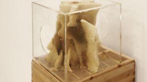 Ren Ri 任日 b.1984, 'Yuansu Series II#6-9 (元塑系列之二#6-9', 2013-2014,acrylic box, natural beeswax, 40 x 40 x 40 cm. Image courtesy Pearl Lam Galleries.
